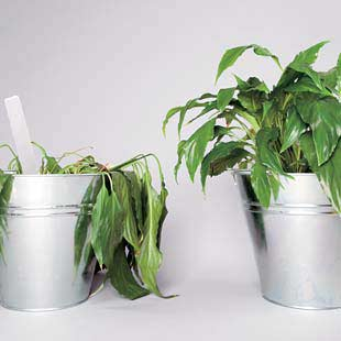 grow indoor plants