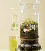 terrarium party