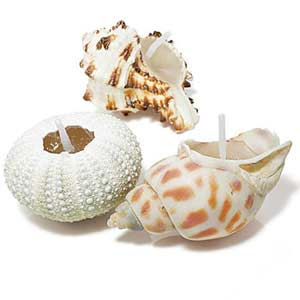 Shell Decorations: Ocean View - Party Decorating Ideas - Every Day ...