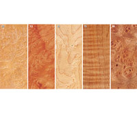 Wood Grains 12-16