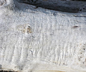 Close-up of white log