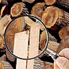 Magnifying glass on lumber