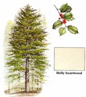 wood_profiles_holly