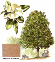 wood_profiles_magnolia
