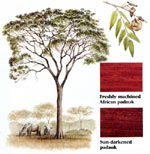 wood_profiles_padauk