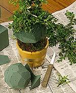 Topiary Treasures