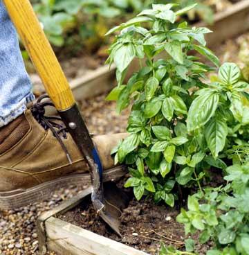 Bring Your Herb Garden Indoors
