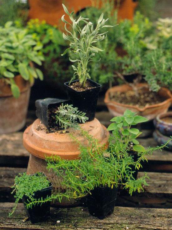 planting potted herbs. Black Bedroom Furniture Sets. Home Design Ideas