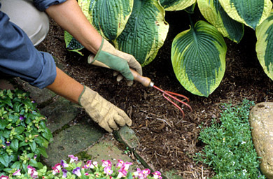 Plant an Annuals Border