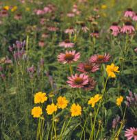 Naturalistic Garden