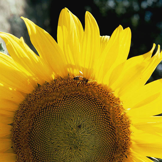 Garden color yellow flowers for your garden mightylinksfo
