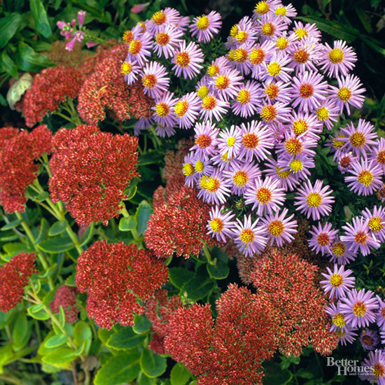 Best Plants for Butterflies for the Northeast