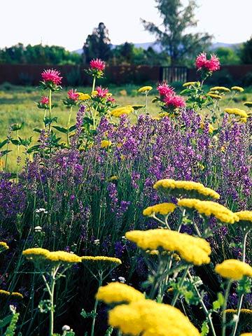 Three-Color Gardens