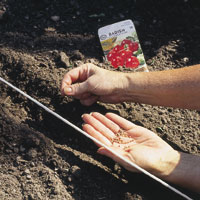 April Gardening Tips for the Mountain West and High Plains