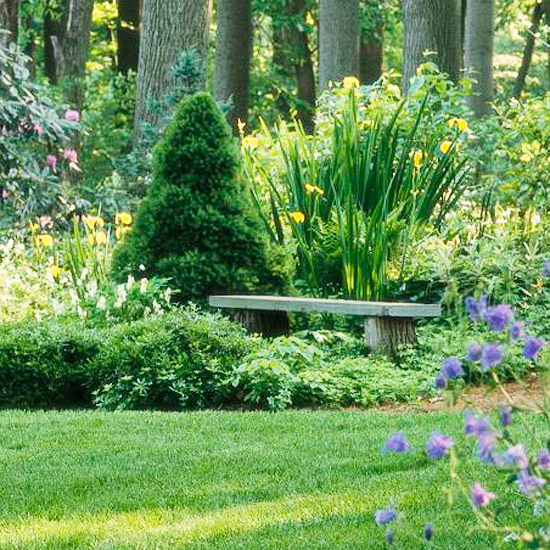 View Of Bench Surrounded By Lawn Trees And Shrubs