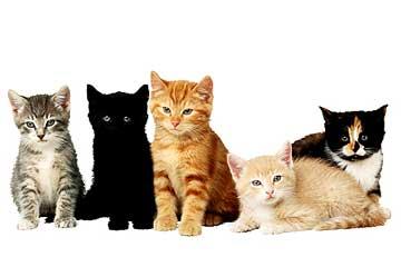 Types of Cat Food