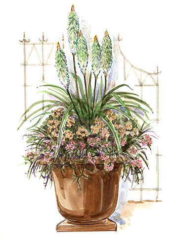Soft Elegance Container Garden