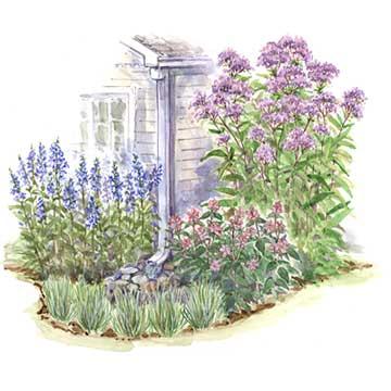 Downspout Garden