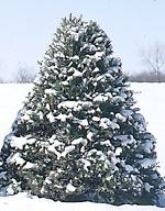 8 Christmas Tree Favorites
