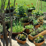 Make Your Own Potting Mixes