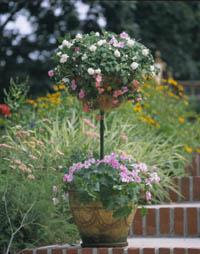 Tantalizing Topiary