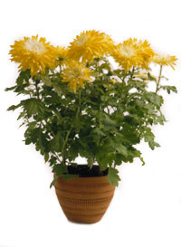 Potted Plant Benefits