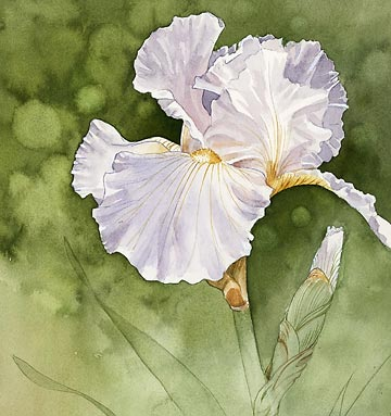 How to Grow Reblooming Irises