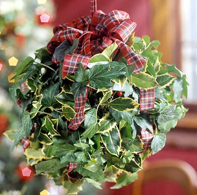 Holly-and-Ivy Kissing Ball