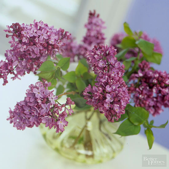 Is There Any Way to Keep Lilacs from Wilting in a Vase?