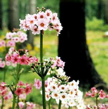 Staking & Fertilizing Perennials