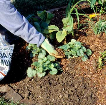 Caring for Your Herb Garden