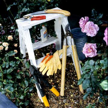 Tools for Rose Care
