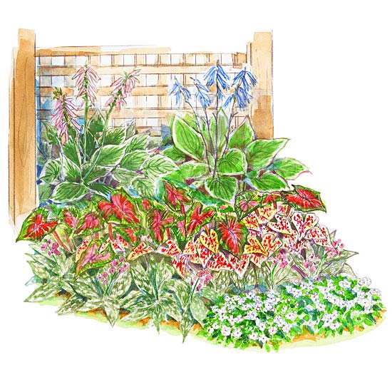 Shady Foliage Garden Plan