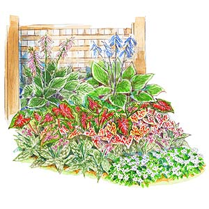 shady foliage garden plan - Flower Garden Ideas Shade