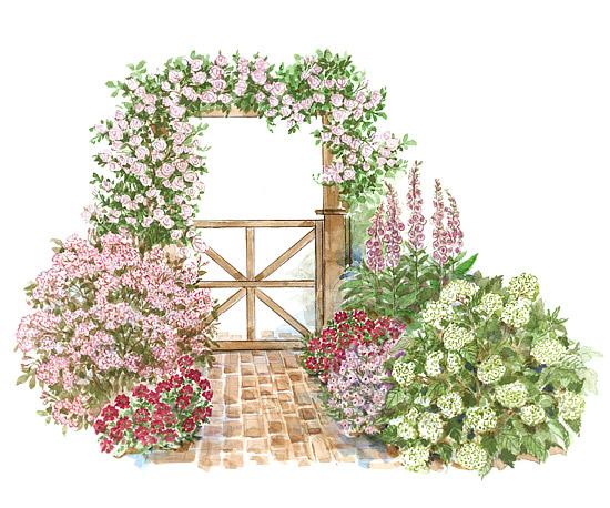 Roses Round an Arbor Garden Plan