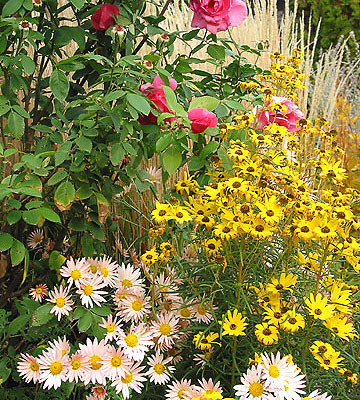 Fall gardening lessons from the better homes and gardens test garden for Better homes and gardens test garden