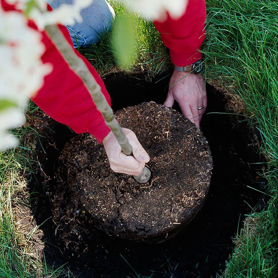 November Gardening Tips for the South