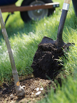 how to add organic matter to soil