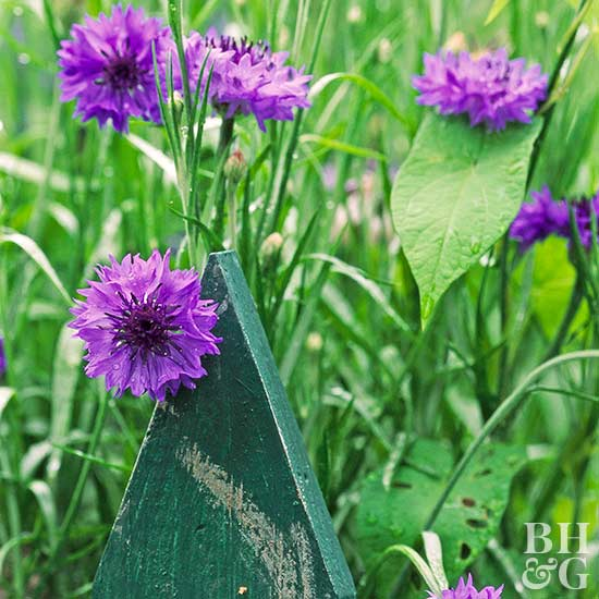 how to get rid of clover in your vegetable garden