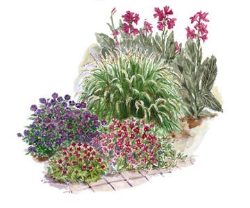 Garden Plan with a Tropical Look