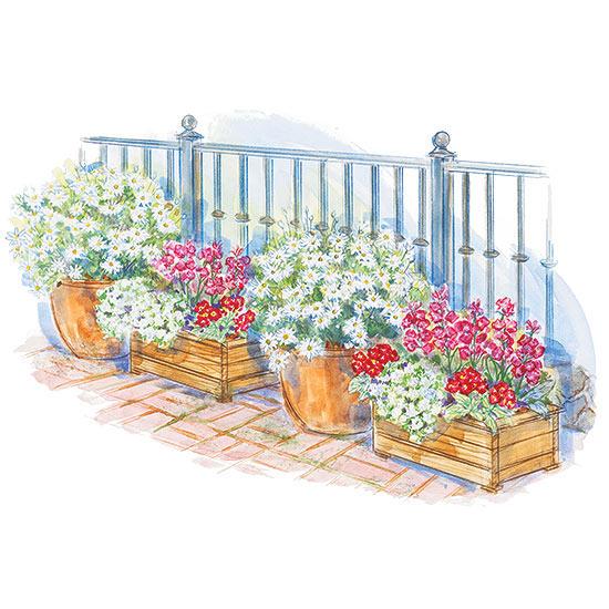 Alternating Colors Container Garden Plan