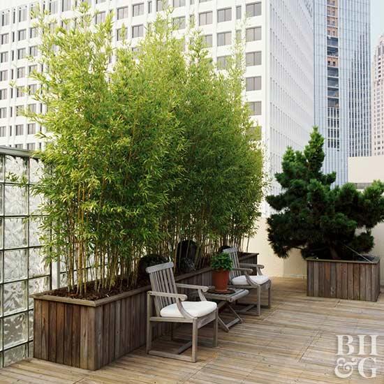 Bamboo plants in the garden for Garden discount chelles