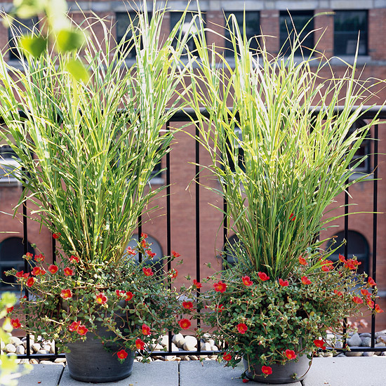 Landscape with ornamental grass for Tall ornamental grasses for pots