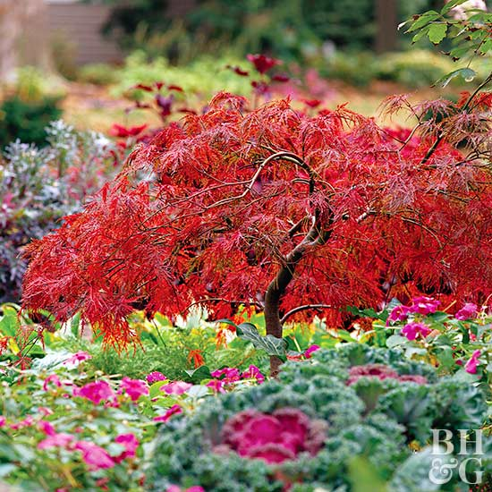 18 excellent japanese maples for Japanese trees for small gardens
