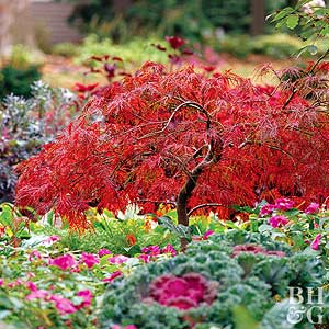 Japanese Maple Trees For Your Yard