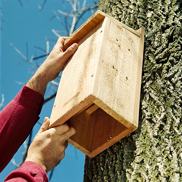 Bat Houses Are A Great Way To Provide Habitat For Bats Use Rough Nontoxic Wood Such As Plywood Or Cedar Make Your Box The Surface Will