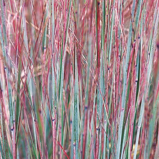 17 top ornamental grasses for Oriental grass for shade