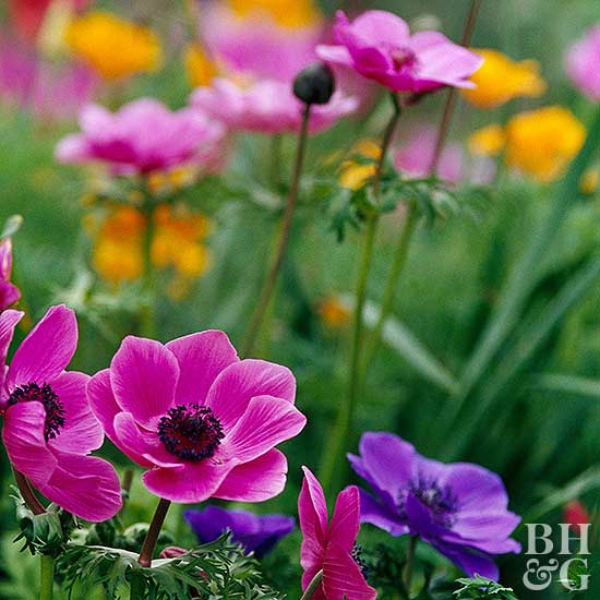 Better Homes And Gardens Sweepstakes >> Anemone