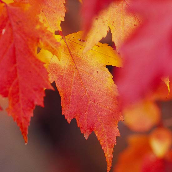 Enjoying Fall Color