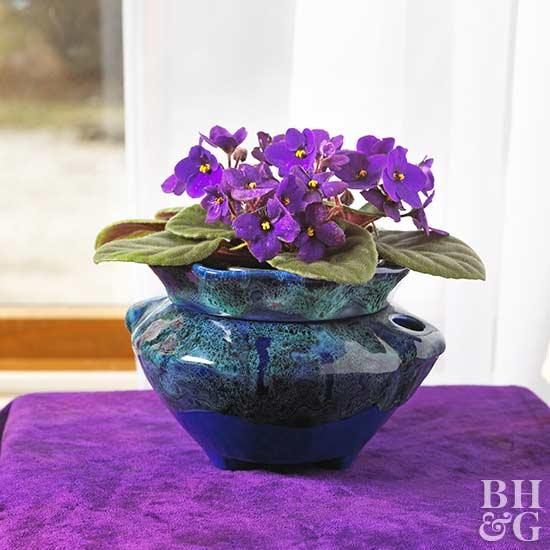 african violet - Flowering House Plants Purple